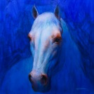 A White Horse from A New Life 2